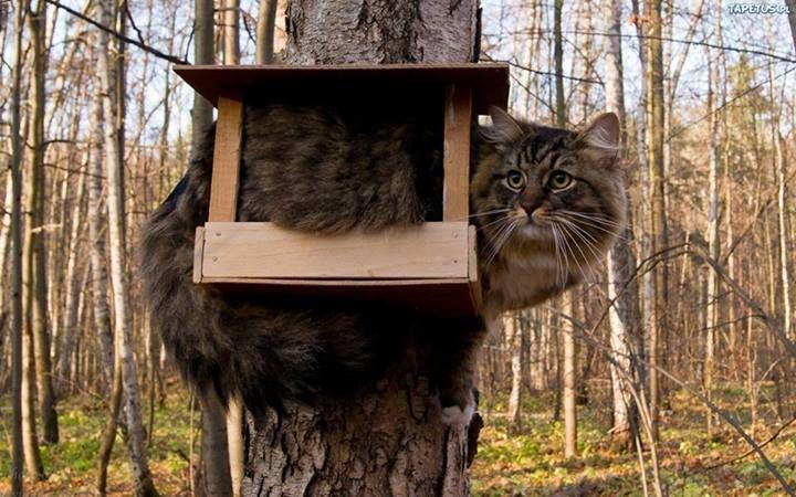 bird feeder cat :)