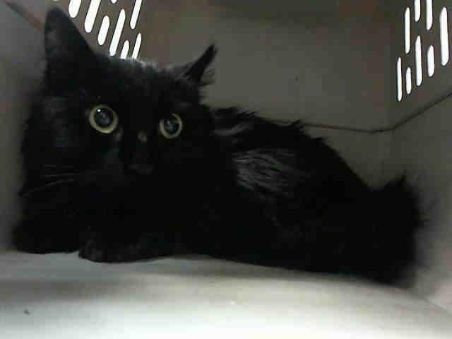 JUNE A1063912 Brooklyn **TO BE DESTROYED 02/03/16