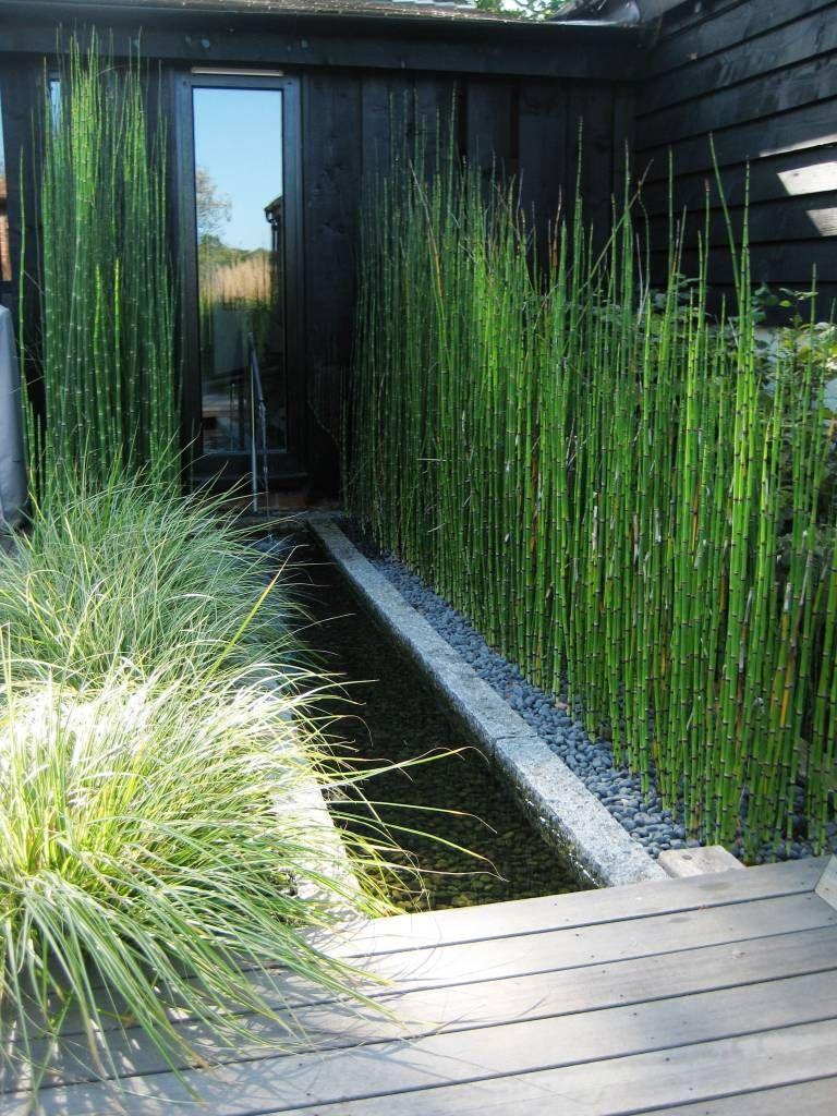 Paardenstaartgras   Combinatie met grassen