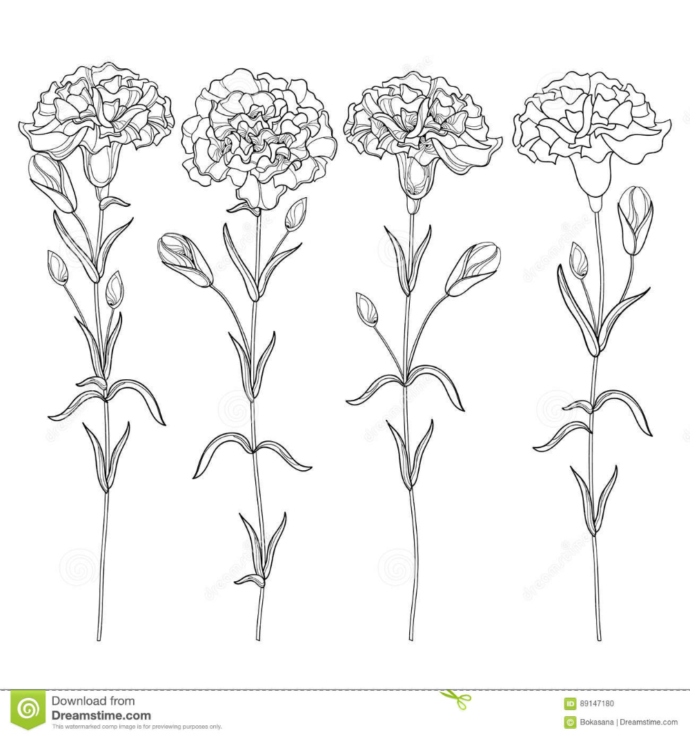 Vector Set With Outline Carnation Or Clove Flower Bud And Leaves In Black Isolated On White Back Carnation Flower Tattoo Birth Flower Tattoos Carnation Tattoo