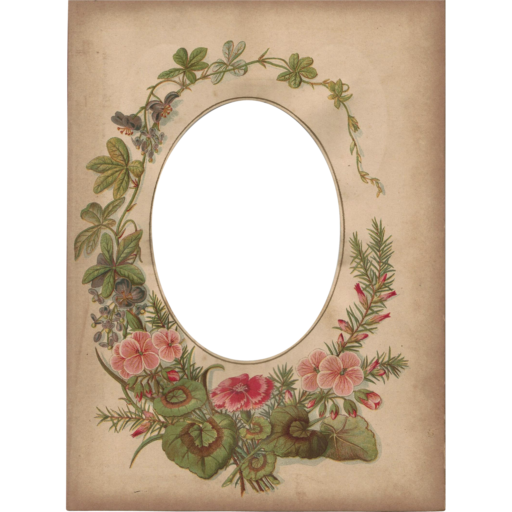 Lovely Floral Page from Victorian Photograph Album, Cabinet Photo ...
