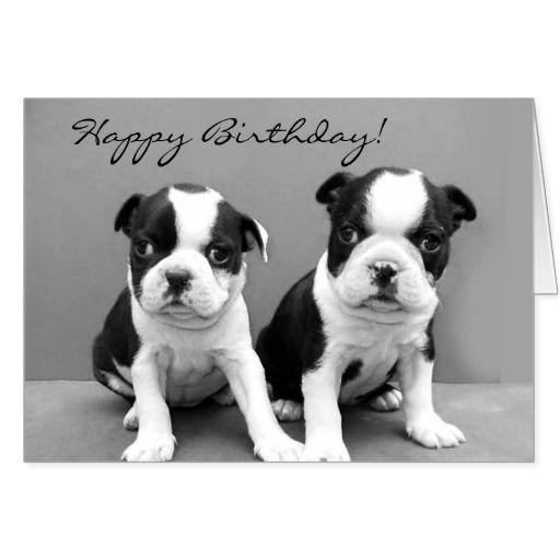 Happy Birthday Boston Terrier Greeting Card Birthday Cards