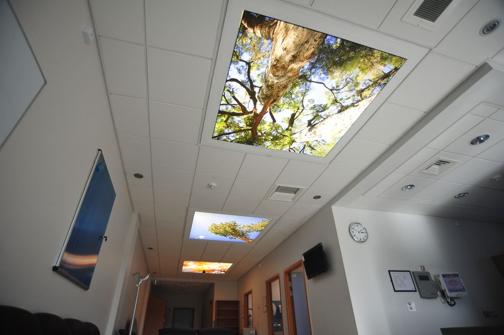 Great Antrim A Waiting Area Tree Canopy Prints Backlit With LED Design