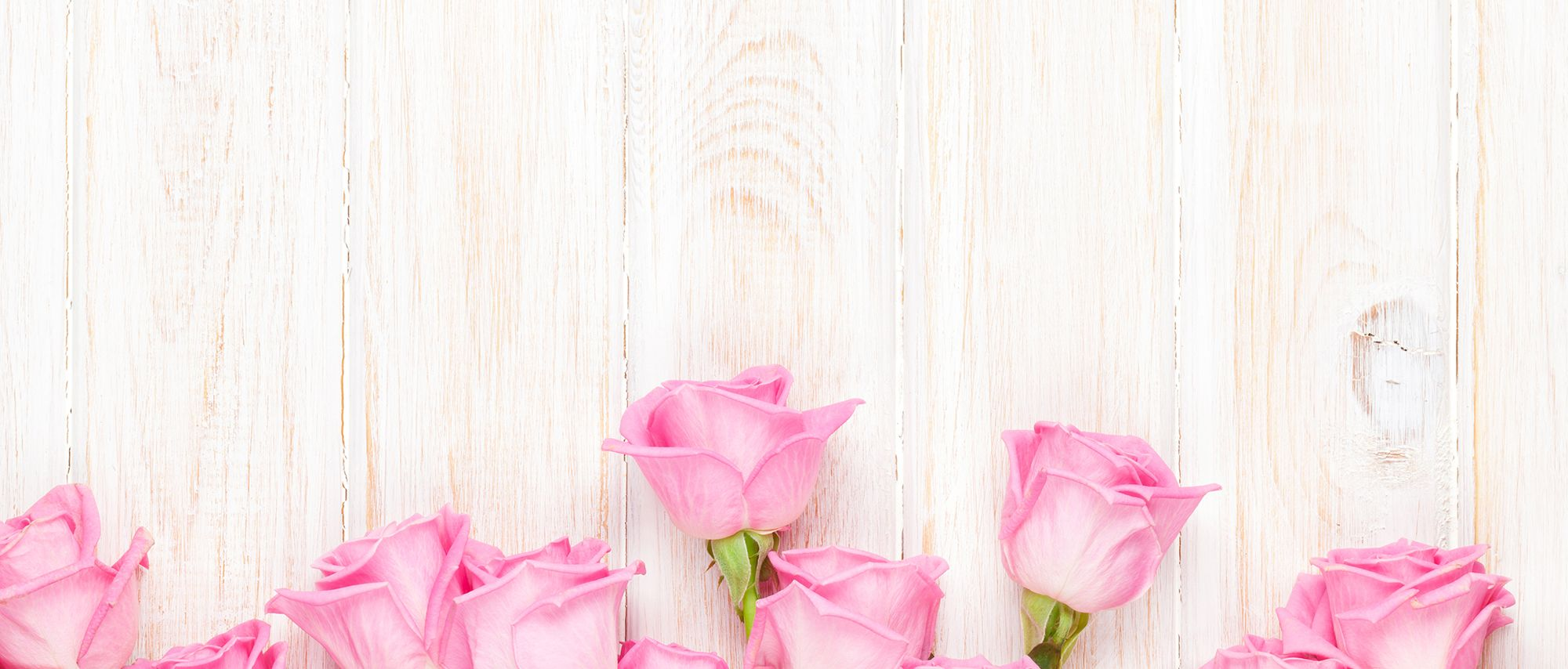 Pink Roses Background Pink Roses Background Pink Background