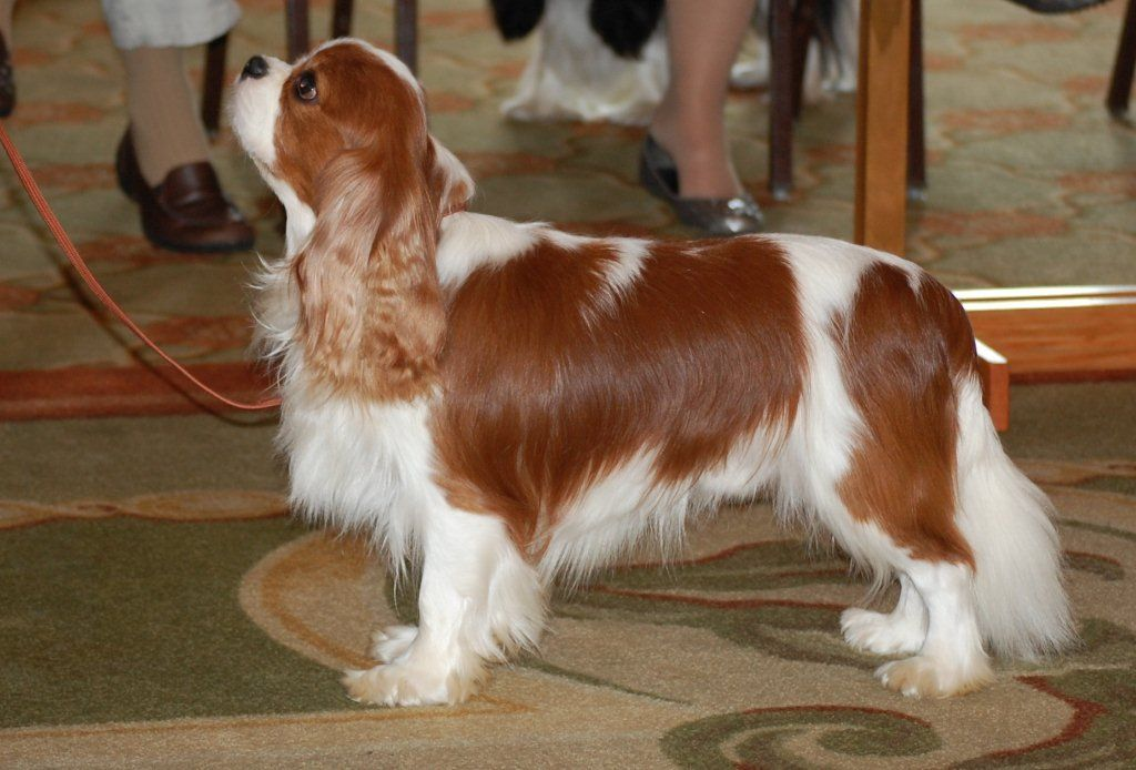 Pin by Debra Ehli Willingham on Dogs Dogs, Animals, Cow