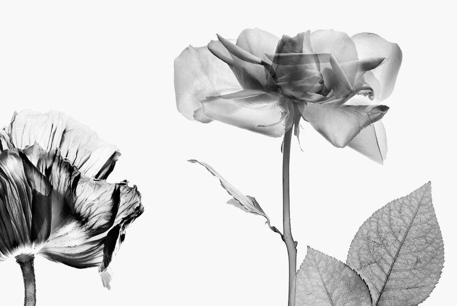Blomrum 12