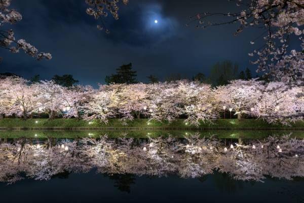 Photographer MASATO SAITO  Sakura  ONE EYELAND