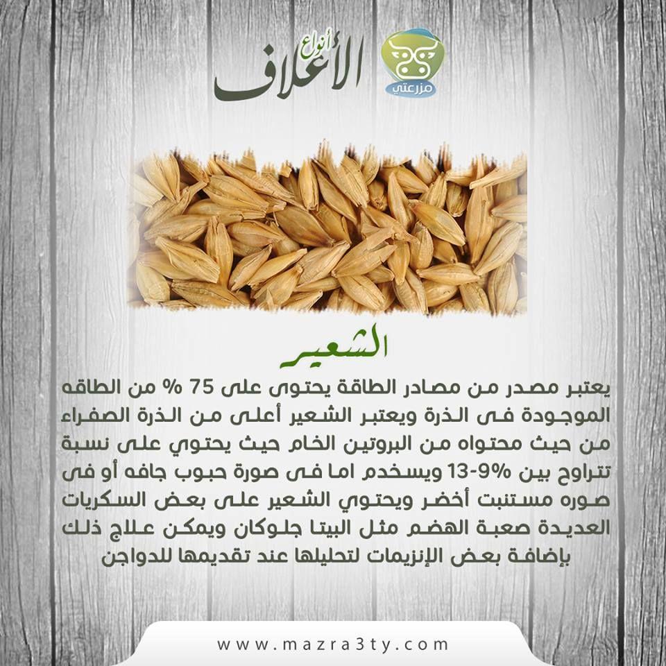 يعتبر الشعير مصدر من مصادر الطاقة يحتوى على 75 من الطاقه الموجودة فى الذرة ويعتبر الشعير أعلى من الأذرة الصفراء من حيث محتواه من البروتي Condiments Food Salt