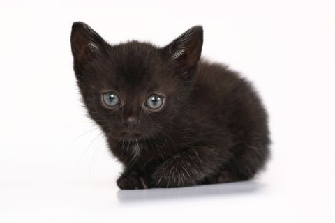 15 Adorable Black Cats For National Black Cat Day National Black Cat Day Black Cat Day Animals