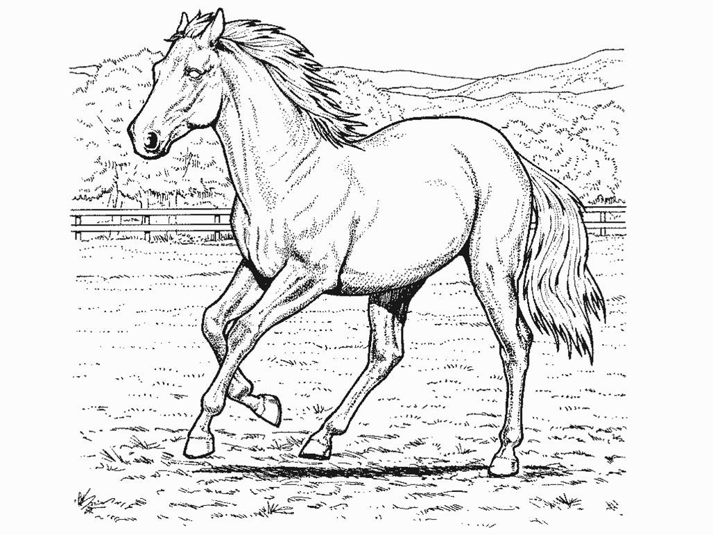 Realistic Horse Coloring Pages Printable Sheets For Kids Get The Latest Free Images Favorite
