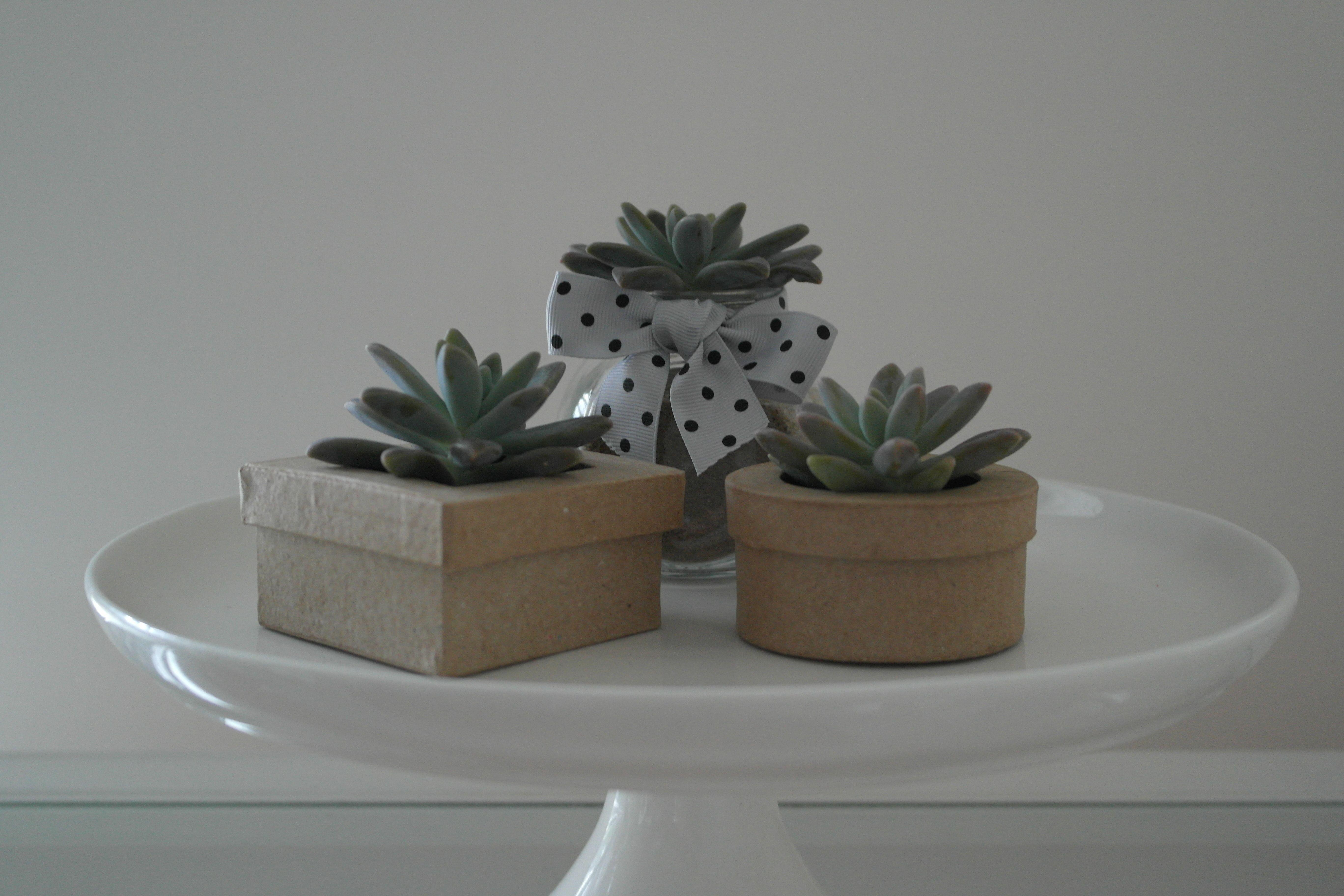 Cute little ideas for wedding bomboniere's using Succulents. Cara Clark Design www.caraclarkdesign.com