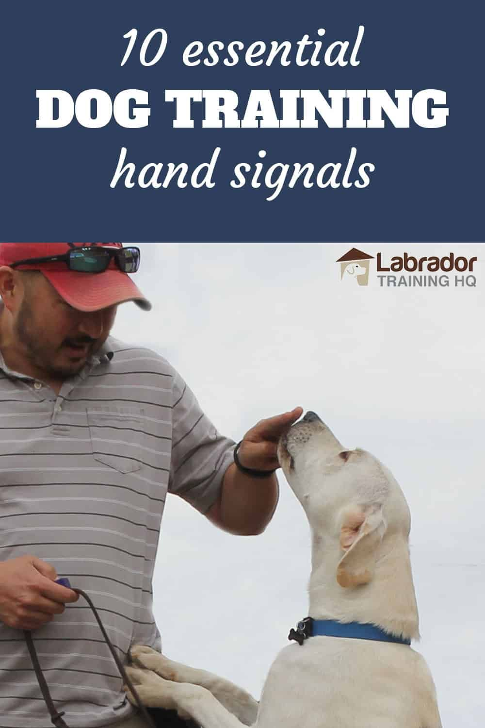 10 Essential Dog Training Hand Signals And How To Use Them Dog