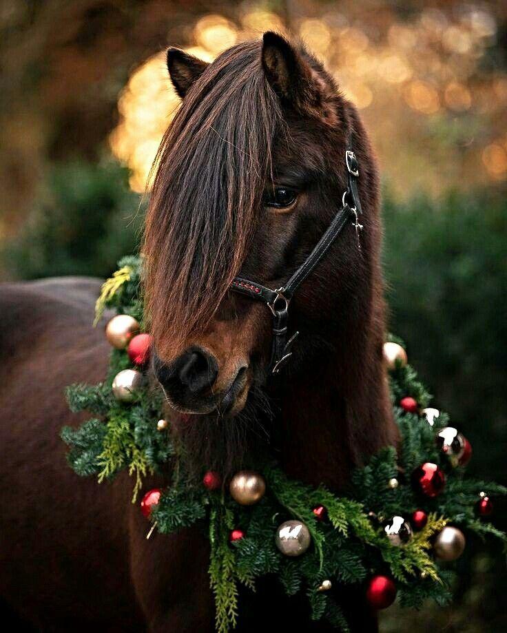 новые красивые картинки с лошадьми привычных очень