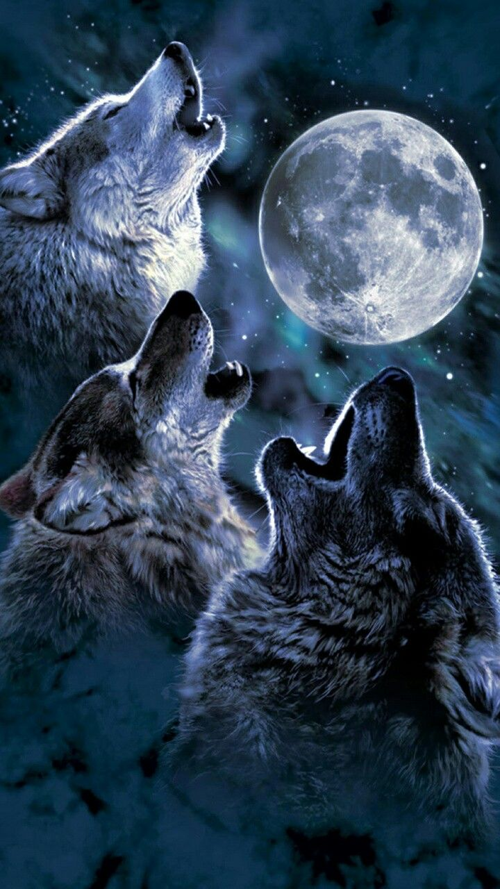 Pin By Haley Wallace On Fantasy Art Wolf Howling At Moon Wolf Love Wolf Spirit Animal