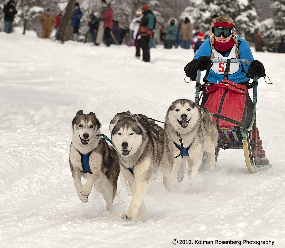 Dog Sled Racing, Punderson State Park, OH Dog sledding