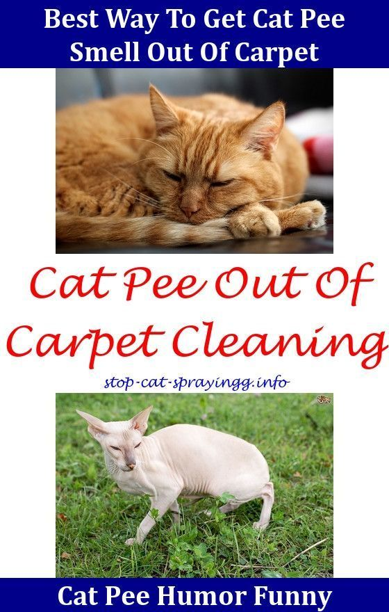 How to Get Rid Of Urine Smell In Carpet