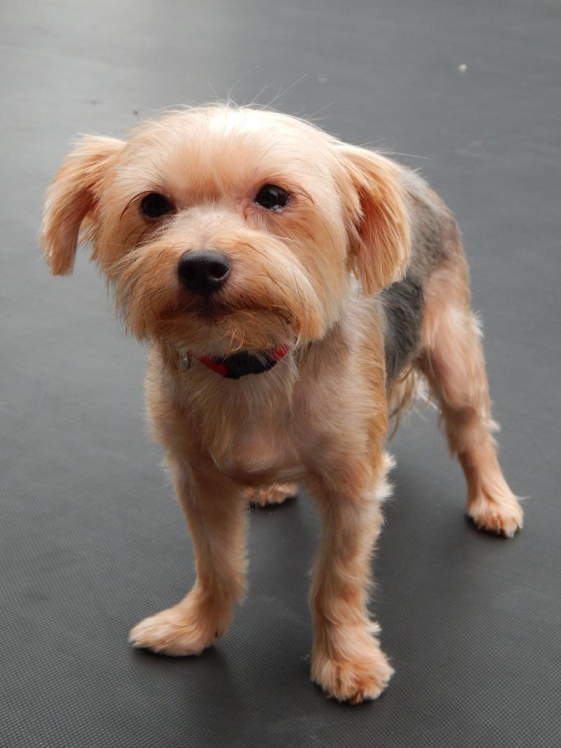 Adopt Zoey 1157 On Petfinder In 2020 Pet Adoption Dog Adoption Animal Rescue