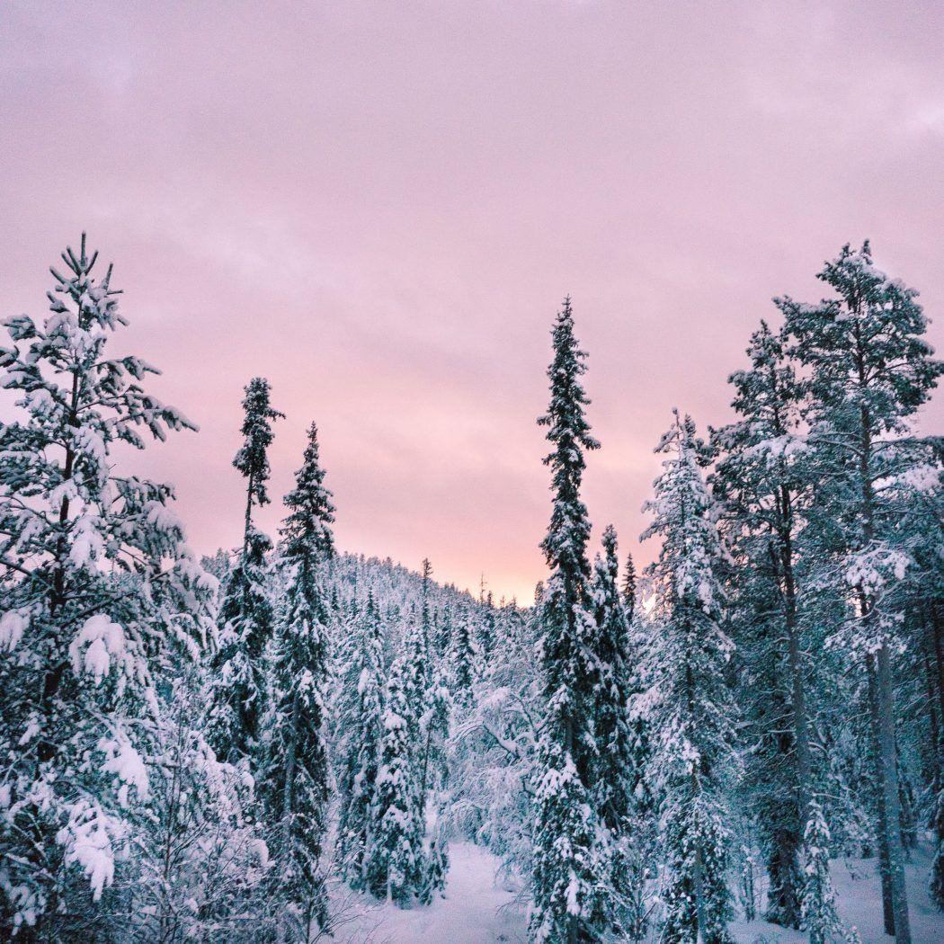 Winter Wonderland In Lapland Finland Find Us Lost Lapland Finland Travel Winter Wonderland Sunset forest snow winter spruce trees