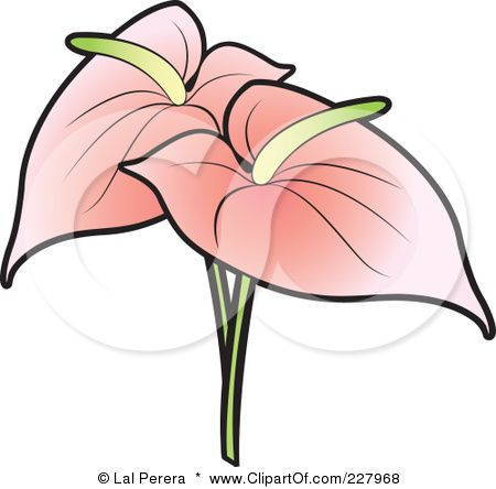Royalty Free Rf Clipart Illustration Of Two Pink Anthurium Flamingo Flowers By Lal Perera Watercolour Texture Background Anthurium Flower Sketches