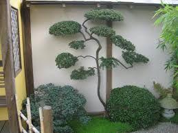 Image result for phillyrea latifolia niwaki
