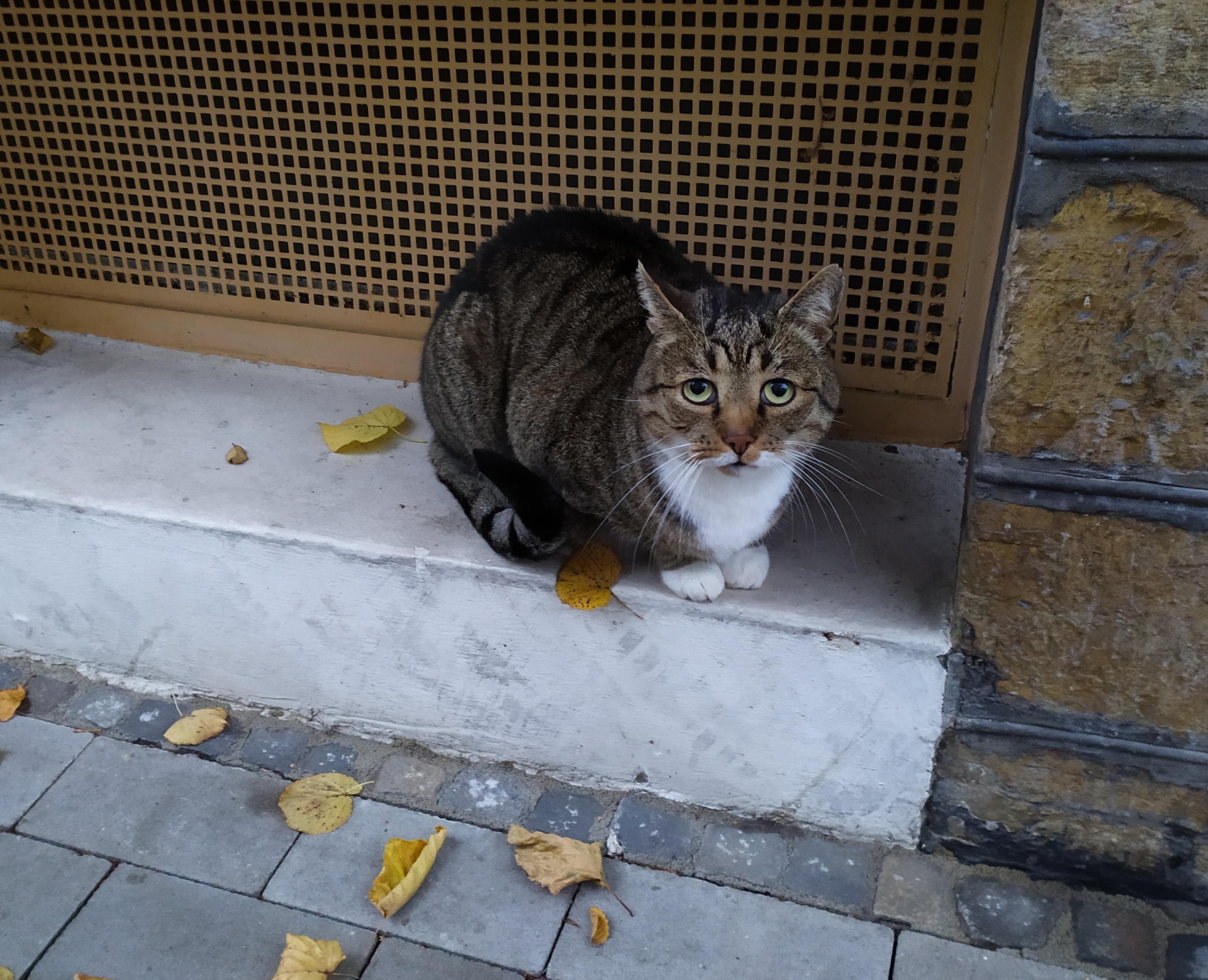 Pin By Saskya Jokinen On A Freekin Dorable Cat Having Kittens Cat Has Fleas Cats