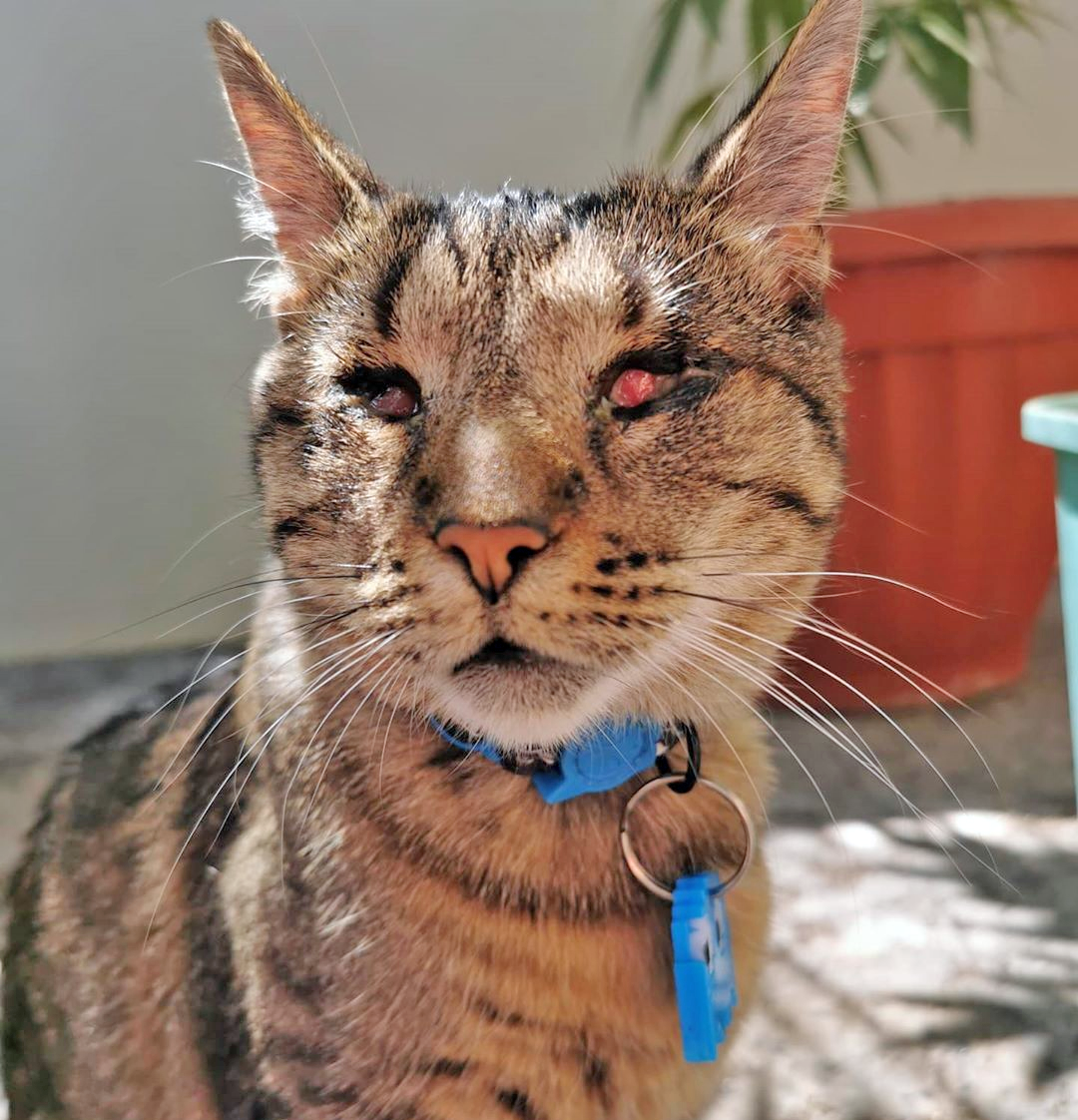 Meet The Handsome Blind Cat From Chile Who Loves Climbing