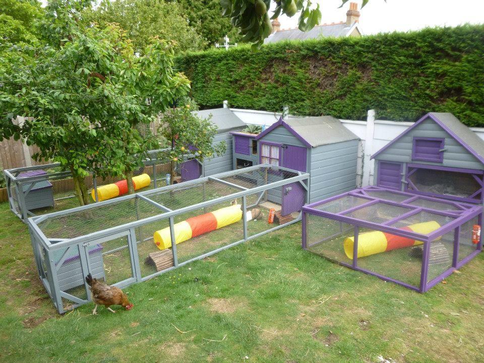 Guinea pig cage tennie pinterest for Outdoor guinea pig hutch