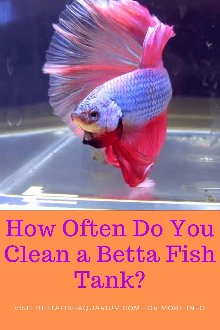 How Often Do You Clean A Betta Fish Tank Betta Fish Tank Betta Fish Fish Tank Cleaning