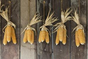 To air dry corn on the cob, leave at least 6 inches of space between ears.