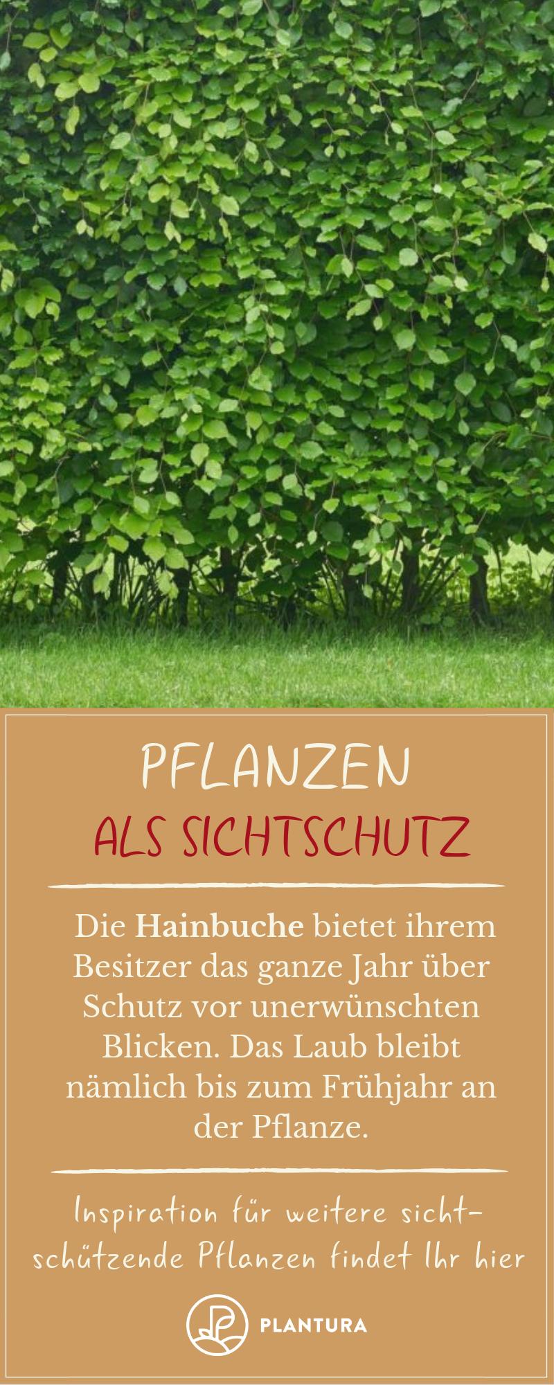 Pflanzen als Sichtschutz: Unsere Top 15 für Garten & Balkon #sichtschutzpflanzen