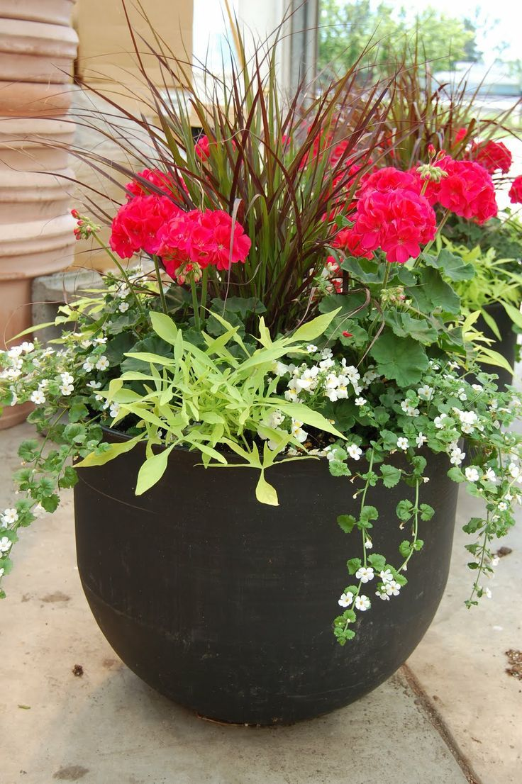 Front Porch Potted Plants Ideas Tips Fetching Image Of Accessories For Decoration Using Large Red Flower Round Black Twin