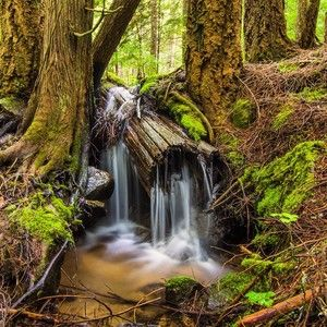A creek runs through it - a little waterfall near Twin Lakes, Idaho. #visitidaho #idahogram #idahoexplored #idaho #waterfall #pacnw #inlandnw #IG_InlandNW #forest #creek