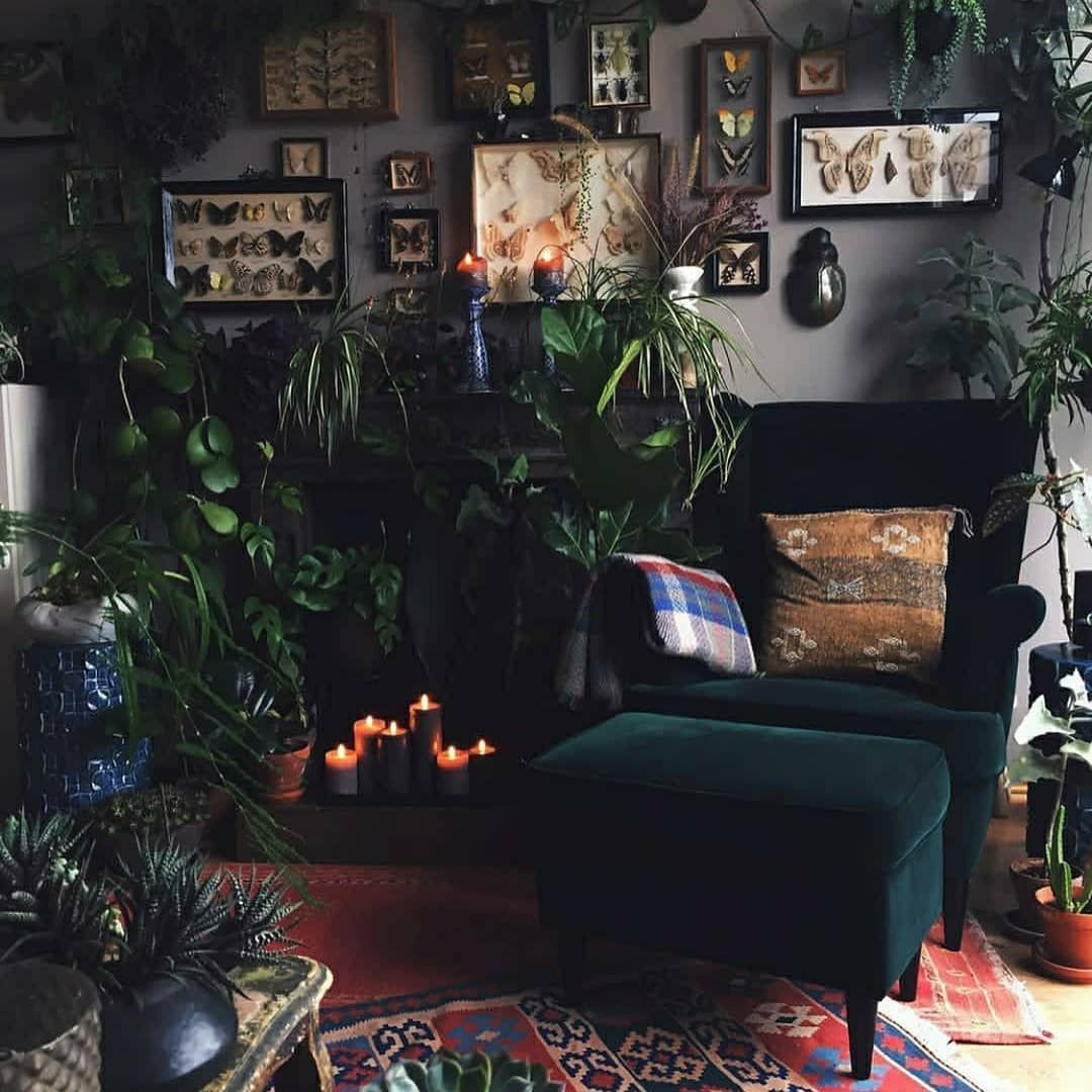 Cheap Indoor Plants You Can Buy Online Dark Living Rooms Home Decor Home Decor Inspiration Living room aesthetic dark