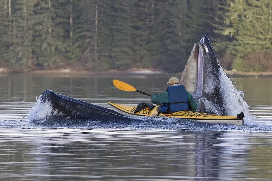 43 Images That Prove You Have Thalassophobia Whale Kayaking Sitka