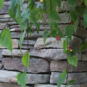 Cultured Stone Landscaping Photo Gallery