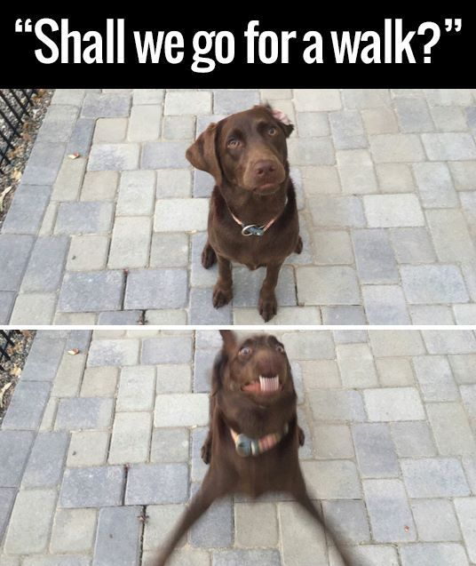 19 Memes Your Dog Will Probably Relate To Dieren Grapjes Grappige Dieren Grappige Honden