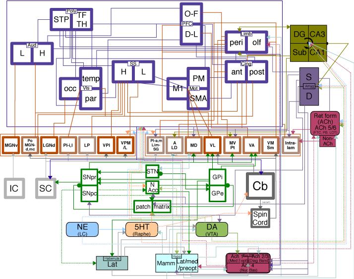 Engineering diagram of the brain | Evolutionary psychology ...