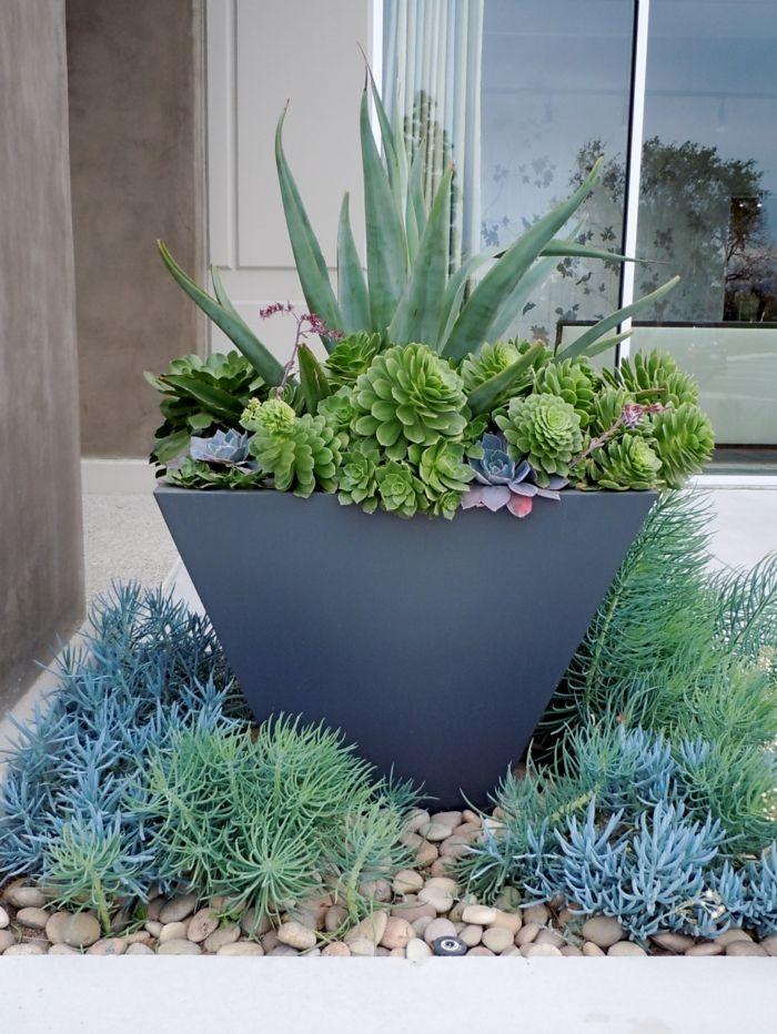 sukkulenten f r drau en winterhart und exotisch suculentas pinterest. Black Bedroom Furniture Sets. Home Design Ideas