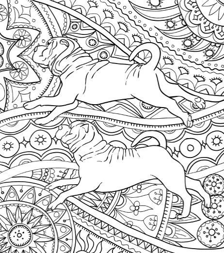 Amazing dogs adult coloring book