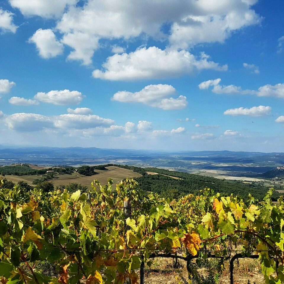 Was there ever a more beautiful place to pick grapes?