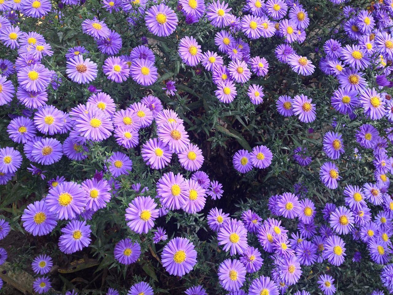 Garden garden violet flowers flowers plant garden garden