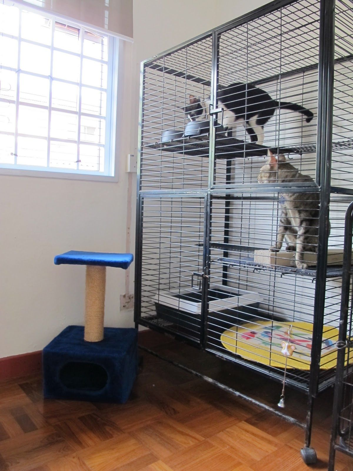 Cages Can Comfortably House 2 To 3 Cats With 2 Large Platforms Click Image For More Details Catcages Cat Enclosure Cat Cages Pet Cage