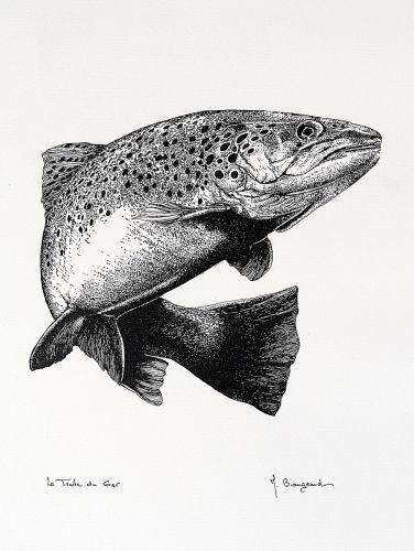 Truite dessin pinterest truite poissons et p che - Dessin truite ...