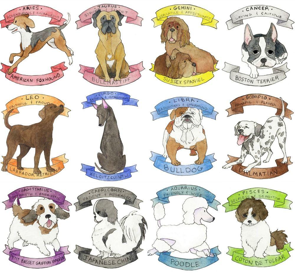 Zodiac dogs | ASTROLOGIC I: астрология | Zodiac signs virgo