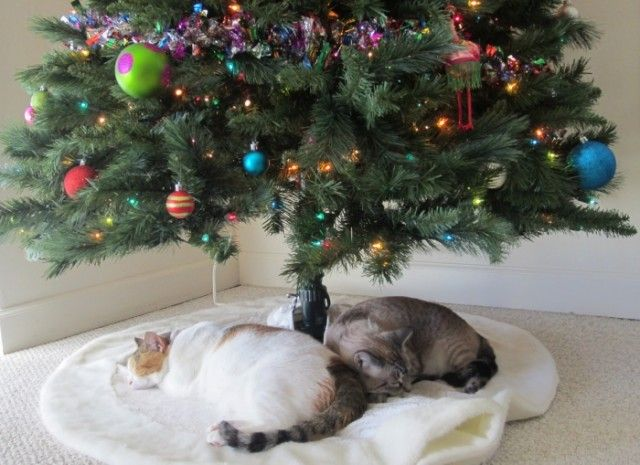 keep your cats out of the christmas tree plus some decorating precautions to keep