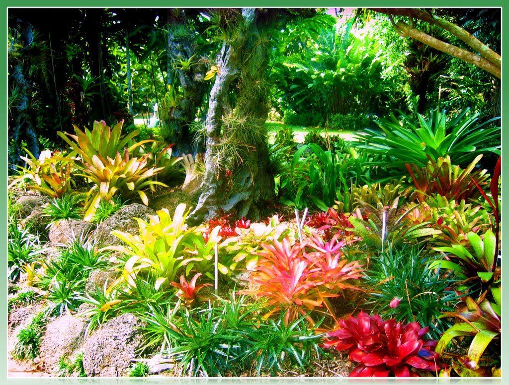 cairns botanic gardens cairns queensland australia. Black Bedroom Furniture Sets. Home Design Ideas