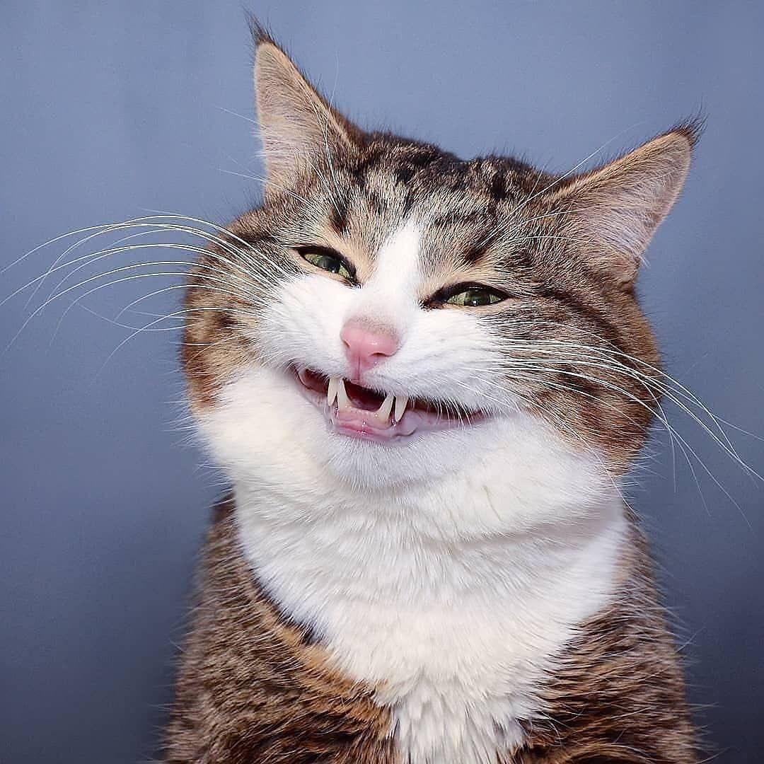 Cats_funny Cats_breeds Cats_cute black_Cats Cats_diy