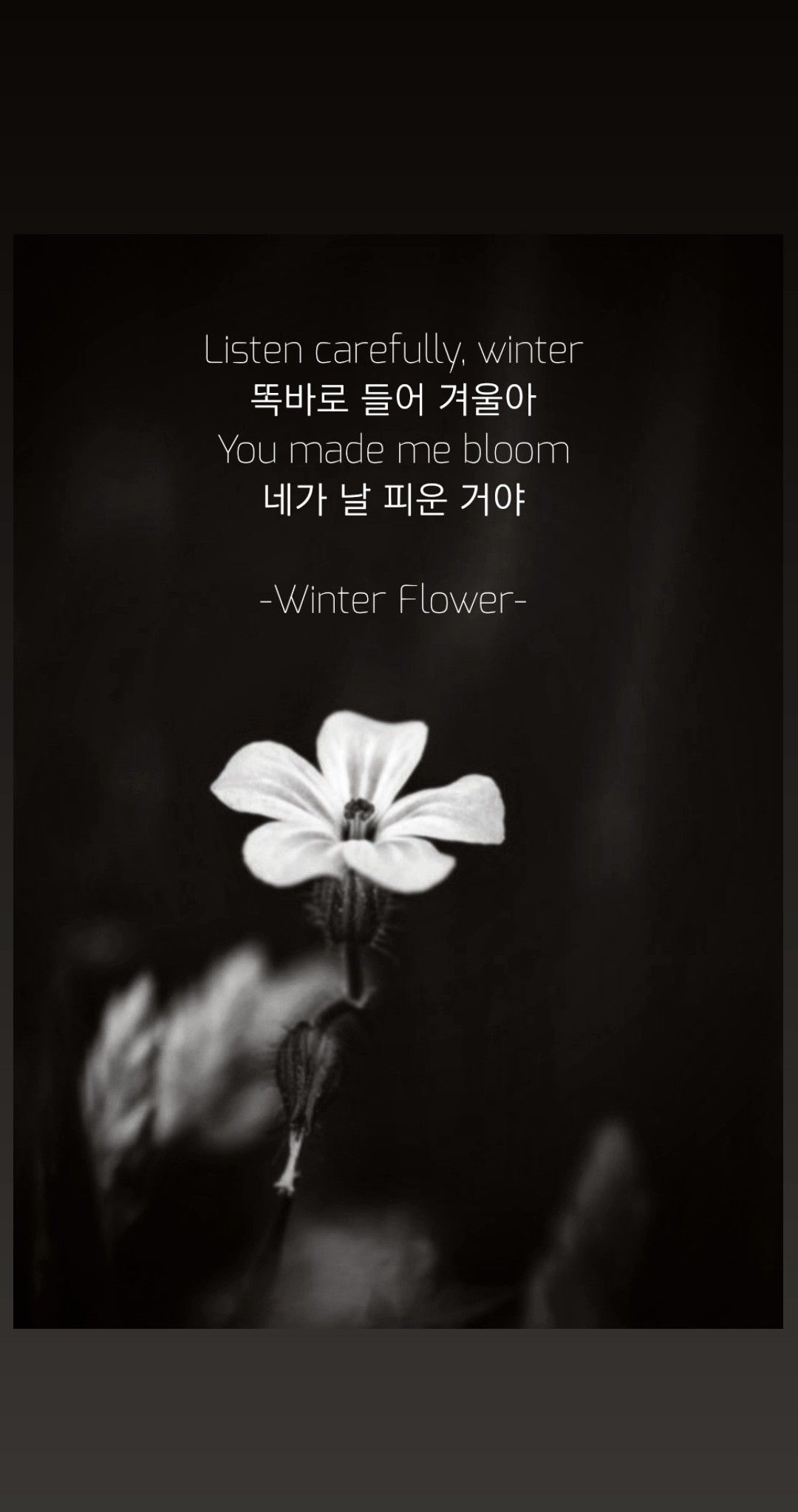 Winter Flower Lyrics In 2020 Flower Lyrics Winter Flowers Beautiful Words