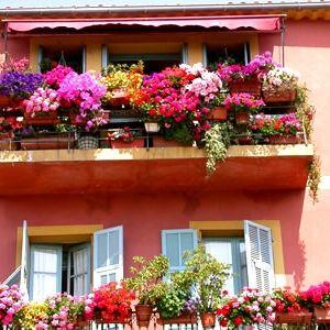Every Color Balcony Flowers Farm Gardens Flower Decorations