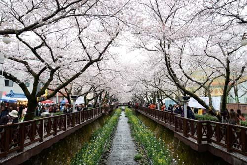 Pin Di Tempat Wisata Di Korea Selatan